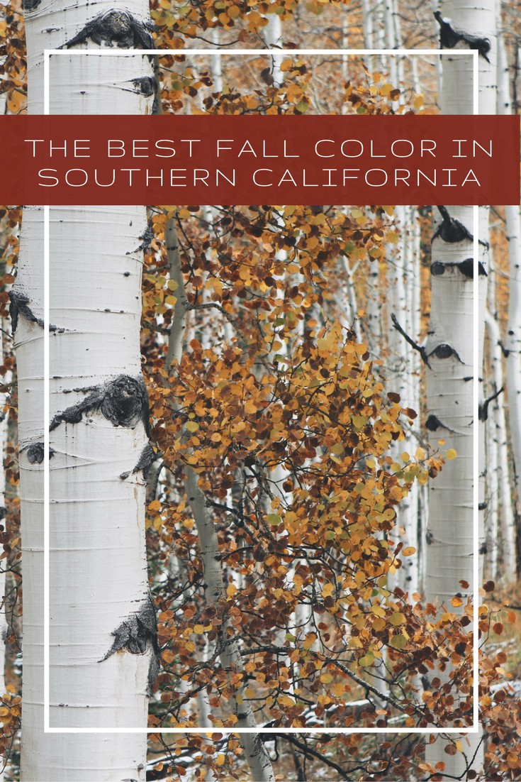The-Best-Fall-Color-in-Southern-California